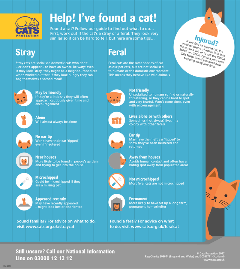 recognizing stray and feral cats